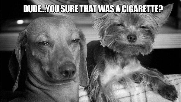 Funny pictures of the day (27 pics)