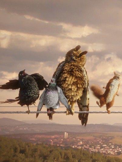 Der heißeste Shit in der Vogelszene? Drei verrückte Vögel packen aus: Grüner Strom, frisch vom Erzeuger & direkt aus der Leitung ballert am besten.