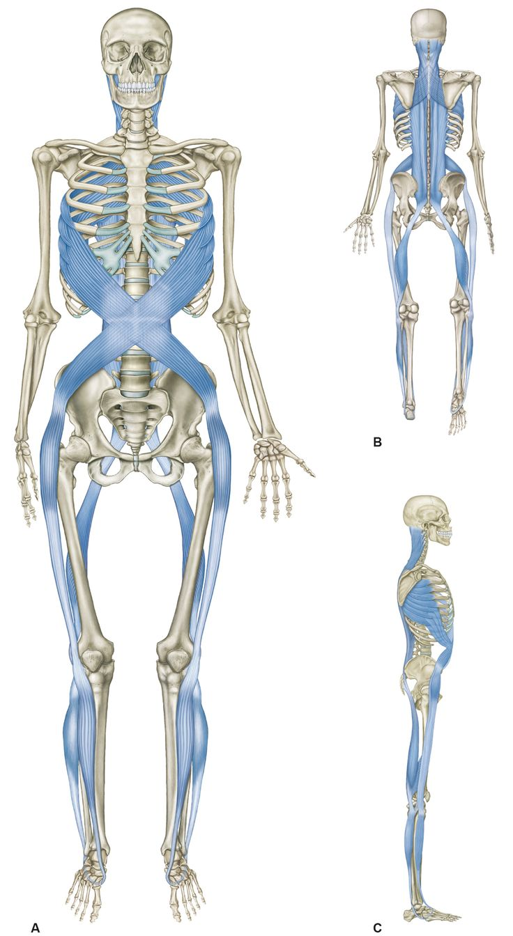 184 best Körper images on Pinterest | Massage, Muscle anatomy and Faces