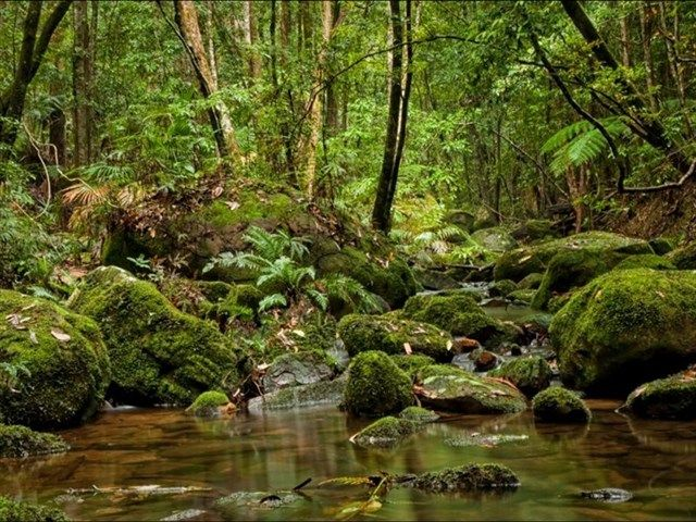 Strickland State Forest - mossy creeks, ferns, green & peaceful