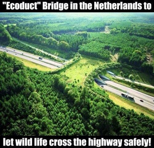 Fascinating Pictures ‏@Fascinatingpics 16h Bridge For Animals, The Netherlands. pic.twitter.com/m7sdVb3Vgy
