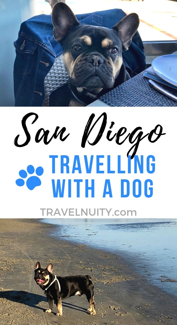 Dog Friendly San Diego Visiting San Diego With A Dog United