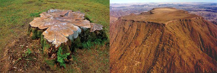 На Земле лесов нет! | Самые свежие новости - Информационный портал Крамола