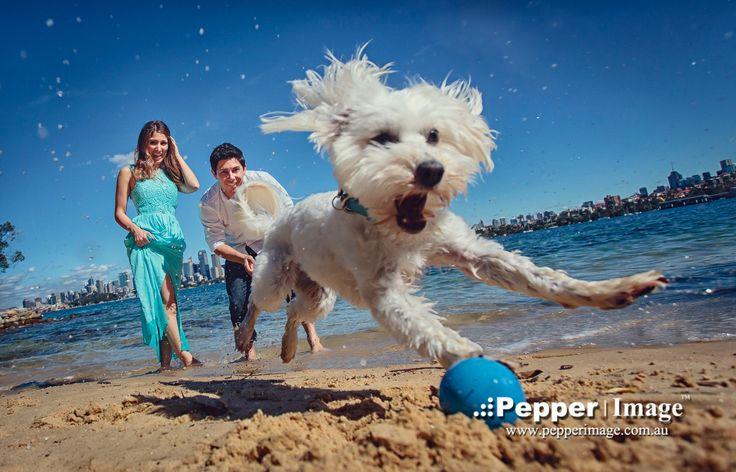 Pepper Image: Alyssa 2013 by Pepper Image Australia on 500px