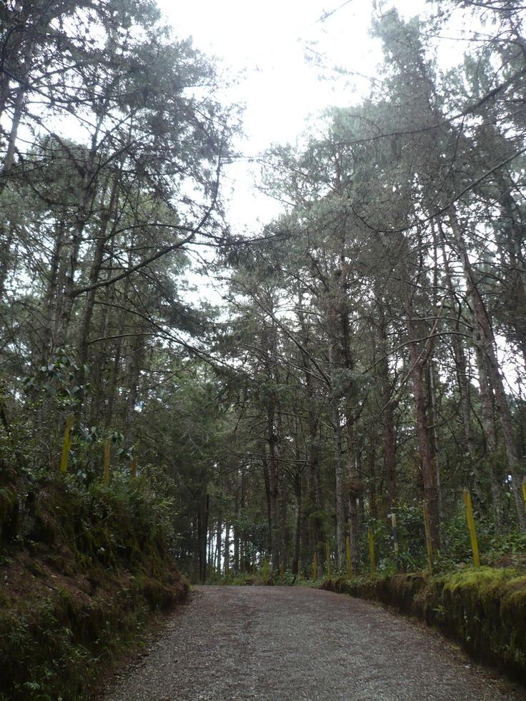 Sendero del Parque Arví