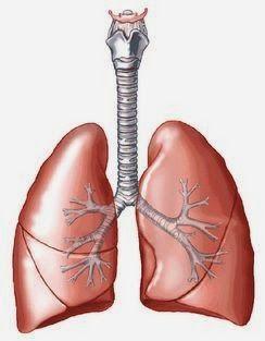 Cara mengobati paru-paru dengan cepat dengan menggunakan resep dokter atau menggunakan bahan-bahan tradisional dari alam. Menyembuhkan dengan sangat efektif dan ampuh tanpa menimbulkan efek samping yang bebahaya bagi penderita. Di artikel ini saya akan mengulas dan men-share tentang cara dan tips mengatasi paru-paru basah dengan cepat..
