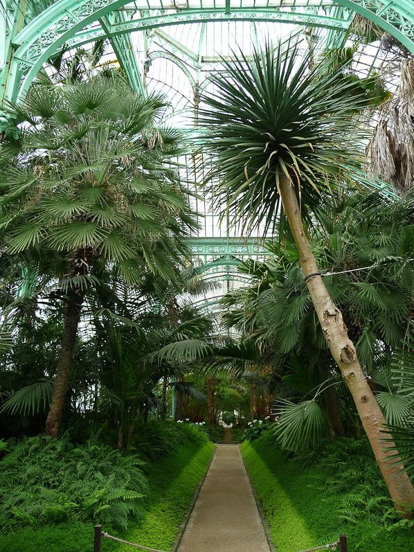 Palmiers dans les serres royales de laeken belgique for Serres de jardin belgique