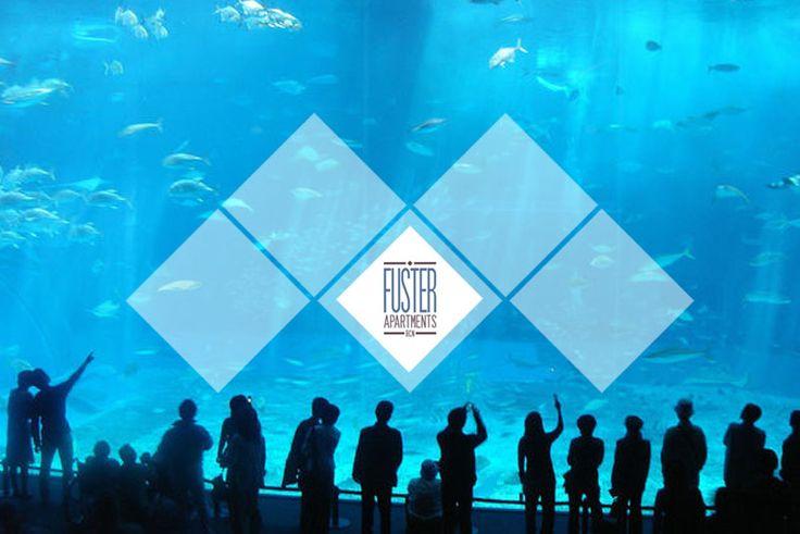 Visit and discover Aquarium de Barcelona. Barcelona Aquarium