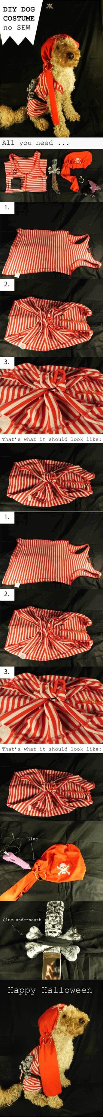 DIY não-costurar Dog Costume 2