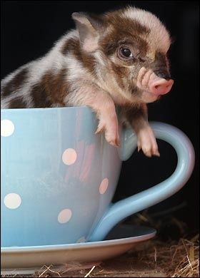 Aww...thinking of my lil sis now (she always wanted one named Baby Oink)
