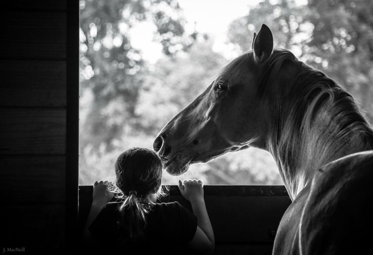 """500px / Time with Ted by Jennifer MacNeill Traylor. """"My daughter and a friend's Paso Fino horse, Teddy."""""""