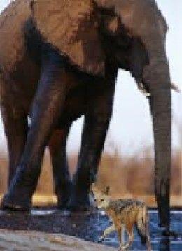The Elephant and the jackal