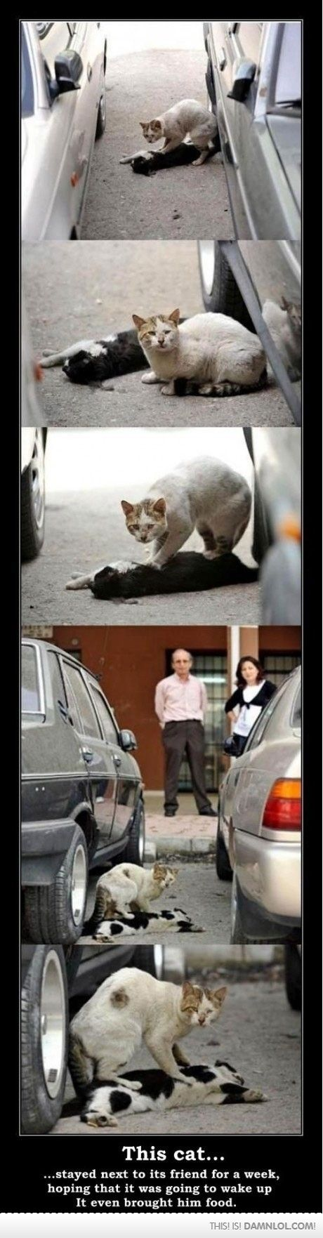 Whoever killed this poor cat is a jerk, I don't care if it was by an accident. #animalshavefeelingstoo