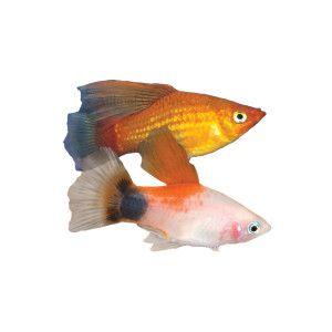 25 best images about fish on pinterest cap d 39 agde live for Petsmart live fish