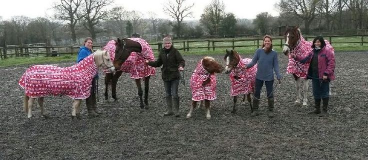 Group shot! 'Thank you for the Christmas rugs Derby House our yard all look great'