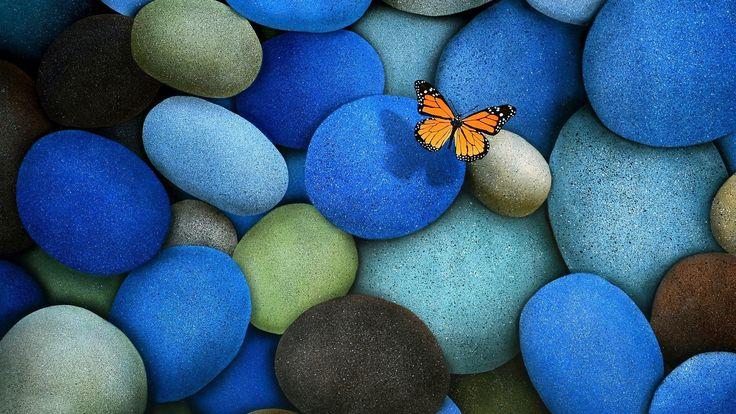 Mariposa en las piedras azules
