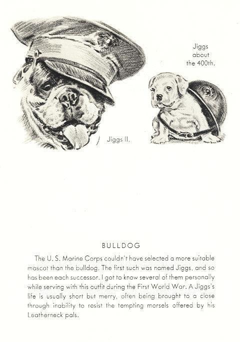 """English Bulldog """"Jiggs 2"""" - Dog Print - 1946 Dennis"""
