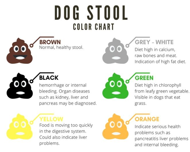 Wondrous Dog Stool Color Chart Stool Color Chart Dog Health Tips Beatyapartments Chair Design Images Beatyapartmentscom