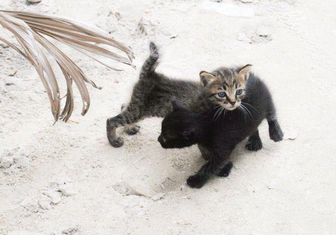 Søte kattunger