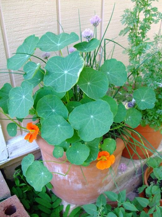 9882 best gardening images on pinterest - Container gardening for beginners practical tips ...