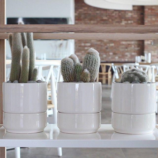 - 깔끔한 #화이트 화기에 #털복숭이 #선인장 #삼총사  - #cactus #리브인리프 #liveinleaf #cacti #lovethecactus #cactusmagazine #plants #interior #HAY #인테리어 #헤이 #헤이선반 #white #식물스타그램 #화분 #like4like #succulent #제주 #호텔 #클라우드호텔 #thecloud #제주도 #가드닝 #동글동글
