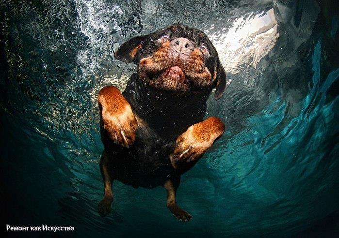 Подводное селфи!