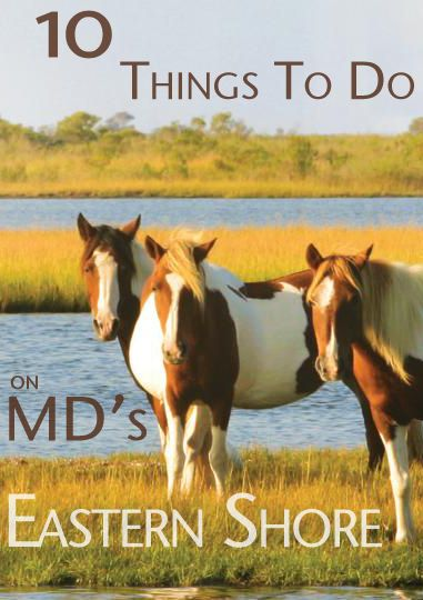 What exactly is there on Maryland's Eastern Shore?  Here are 10 things for you to check out! #ocmd