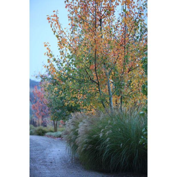 Robert Boyle Landscaping - Beautiful pennisetum in the forground