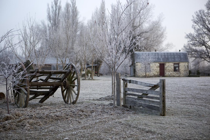 Winter frost, still beautiful and Lombardy Cottage