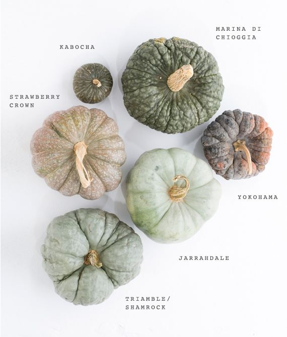 Green heirloom pumpkin varieties | Photo by Scott Clark | See more on 100layercake.com/blog