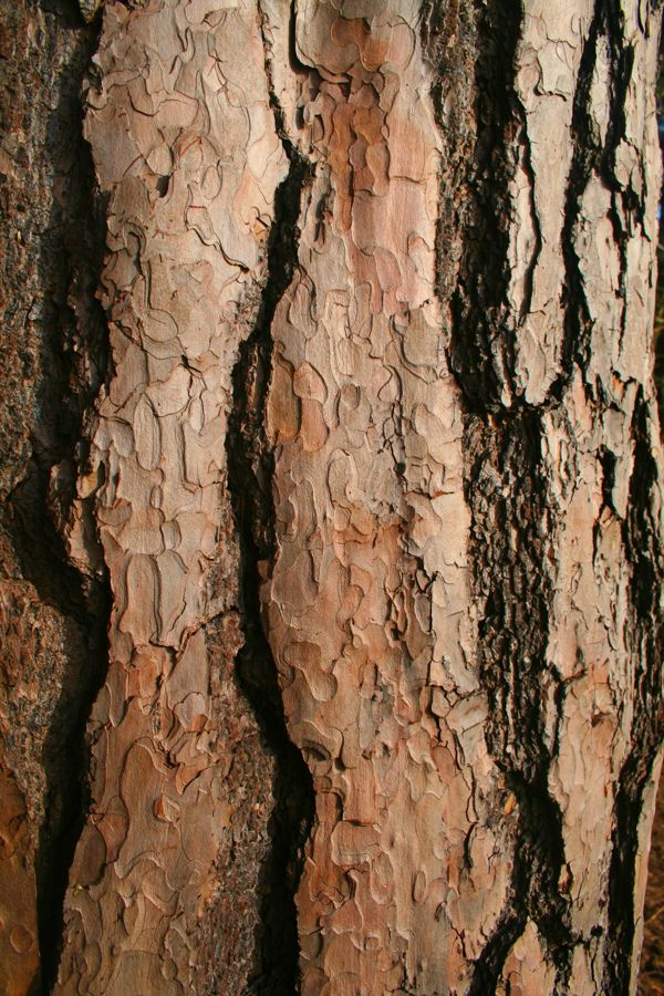 Texture :: PHOTOGRAPHY :: Natural Pattern by Luke Tierney, via Behance