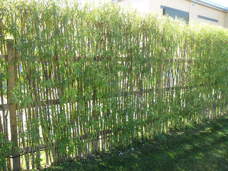 bamboo fencing design ideas for your inspiration natural small bamboo plants fencing choosing beautiful