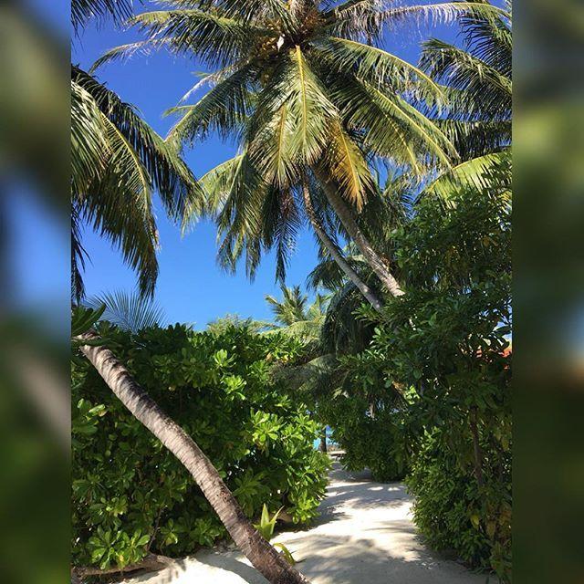 tropical island @kurumba_maldives @emirates @kurumbamaldive @sheratondubaicreek #kurumbamaldives #emirates #honeymoon #25weddinganniversary #maldives #vienna #austria #igers #igersvienna #igersaustria #discoveraustria #igersoftheday #ig_vienna #picoftheday #instagood #photooftheday #instagram