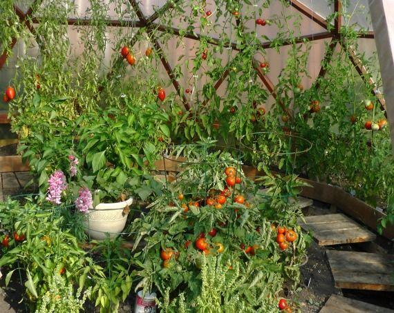 Geodome greenhouse plant arrangement greenhouse plants for Garden arrangement of plants