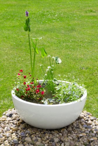 17 Best Images About Gardens And Ponds In A Planter On Pinterest Gardens Planters And