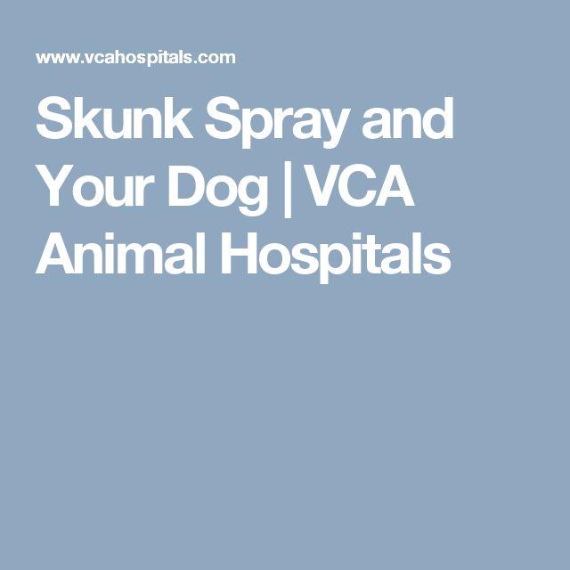 Skunk Spray and Your Dog | VCA Animal Hospitals