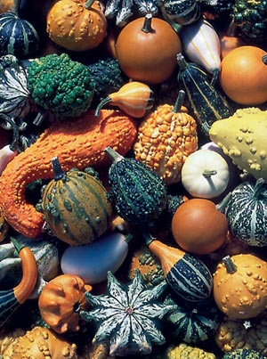 Gourd Decorative Mixed - The Diggers Club