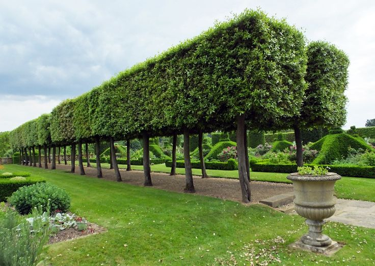 hedge at Hatfield House East Garden