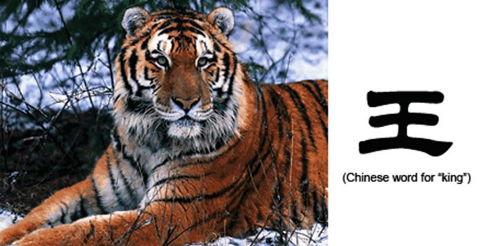 20 Unusual Facts About Tigers You Probably Didn't Know 6