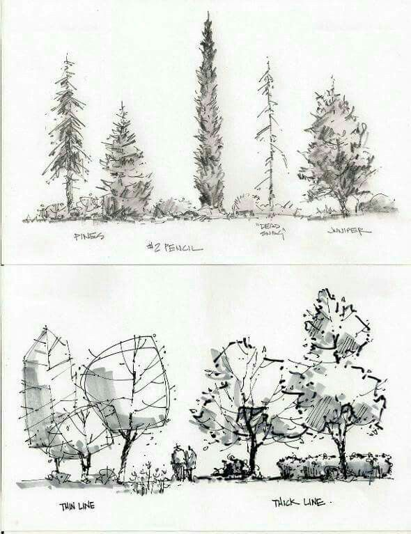 1000 images about alberi tree on pinterest sketching for Garden design sketches