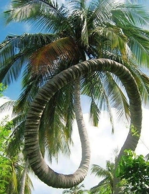Not Your Average Palm Tree