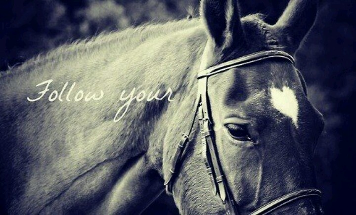 #horse #equine #quote #heart