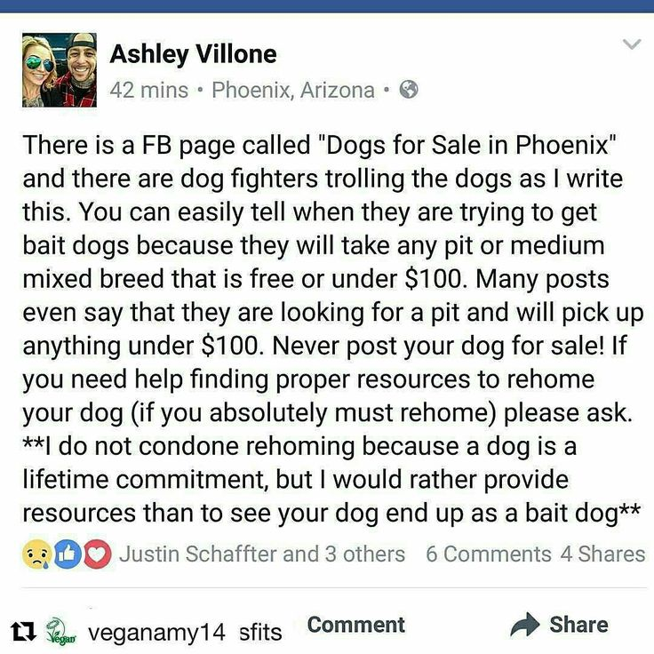 BEWARE OF DOG FIGHTERS ON FACEBOOK
