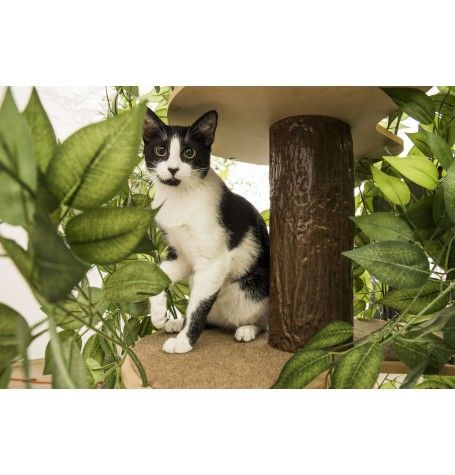 excellent inspiration ideas cool cat houses. Cat Tree Furniture With Leaves 237 best Cool  images on Pinterest Cute kittens