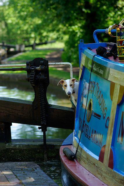 narrowboat! house boat dog