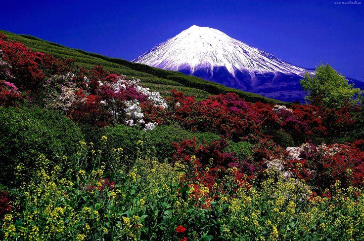 Łąka, Kwiaty, Wulkan