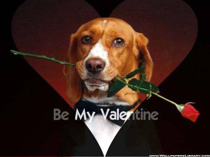 Valentine Dog | Free Valentines Day Wallpapers, Valentines Day .
