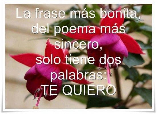 Tarjetas Con Flores Y Frases 2 Compartir Pinterest