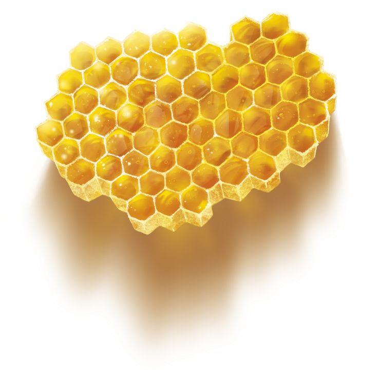 miel - illustration patrickclouet.com