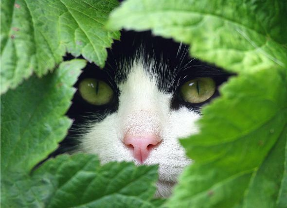 How to Calm Down a Cat: 5 Herbs for Cat Stress Relief | petMD